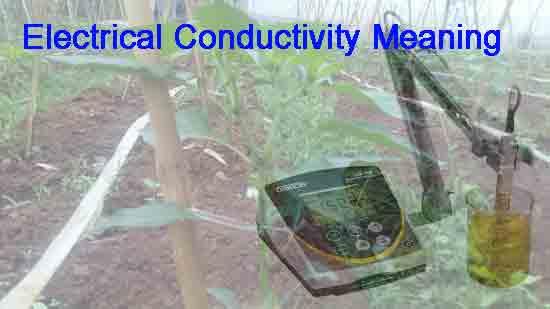 Memahami Konduktifitas Listrik (EC) dan Pertumbuhan Tanaman