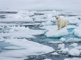 القطب الشمالي يحترق !!!