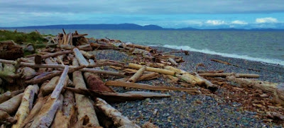 West coast beach with driftwood lean-to