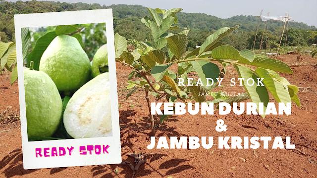 Taman Tahfidz Firdaus Purwakarta, Kebun durian dan Jambu Kristal Ready stok