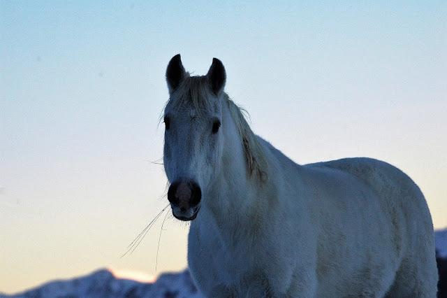 Cavallo Selvaggio Pescasseroli Abruzzo