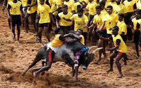 Mass protest in Marina beach for Jallikattu