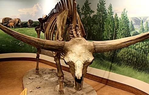Royal Saskatchewan Museum Regina