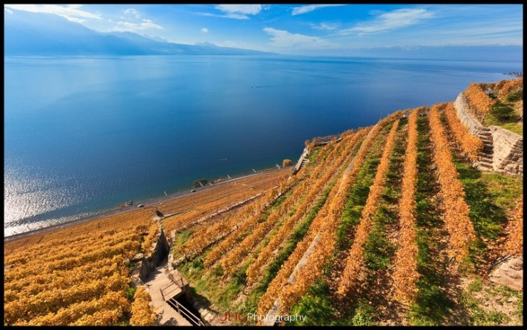 Top 10 Fun Things to See and Do in Switzerland - Lavaux Vineyard Terraces