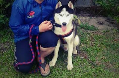 Cara Terbaik Merawat Anjing Siberian Husky