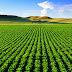 Campo: o que fazer para produzir de maneira mais sustentável