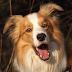 TÉMA: Vtipná videa a hloupí psi...