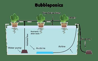 Deep Water Culture (DWC)
