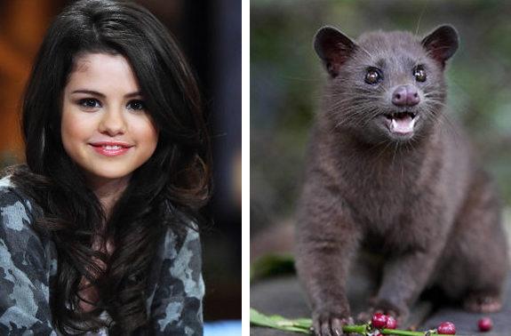animals funny gomez selena luwak animal likes alike celebrity pets lorax