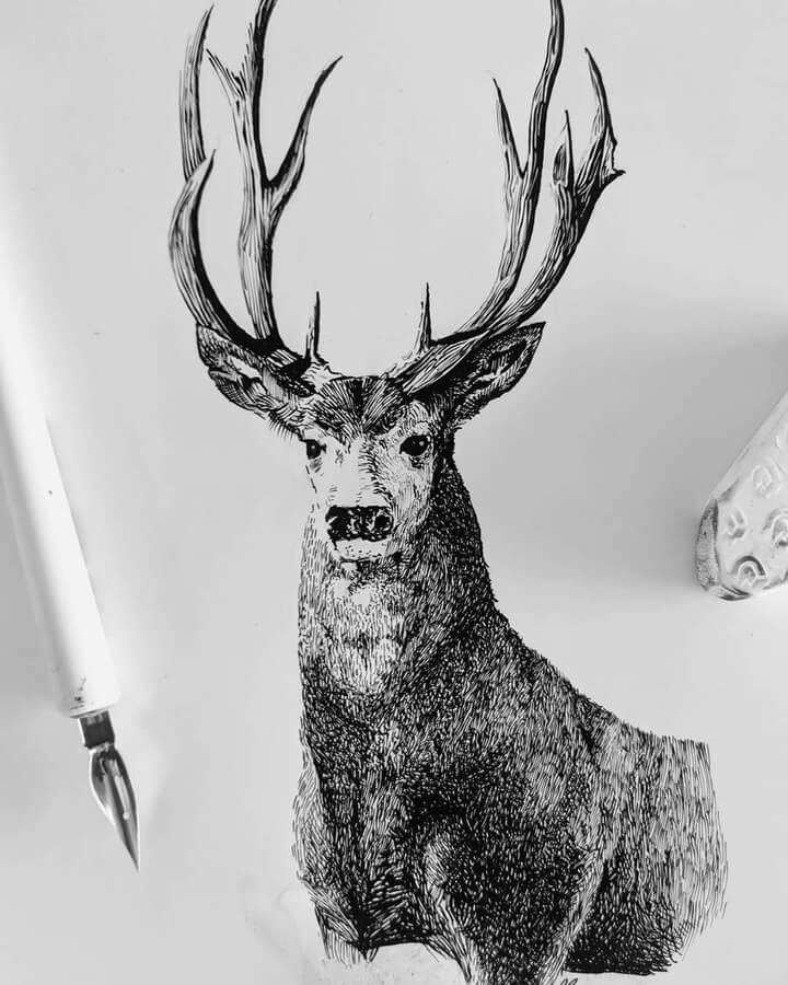 10-Majestic-stag-www-designstack-co