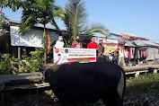 Safrial Dan Cici Halimah, Qurban di Kampung Nelayan Tanjab Barat