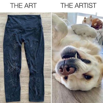 dog memes about humans, dog memes about coronavirus, dog memes about quarantine, dog memes about covid, dog memes about work, dog memes about corona, dog memes about food, dog memes about love, dog memes angry, dog memes and, memes dog and cat, dog memes then and now, dog memes clean and funny, funny dog memes and pictures, dog pictures and memes, annoying dog memes
