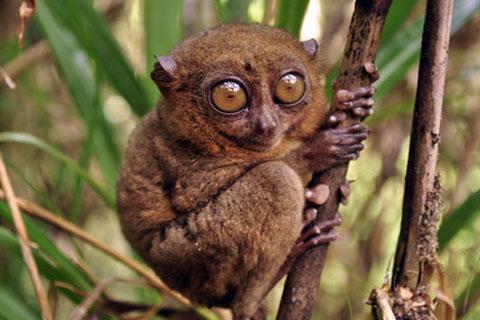 Ain defali online adol les animaux les plus curieux - Animaux a gros yeux ...