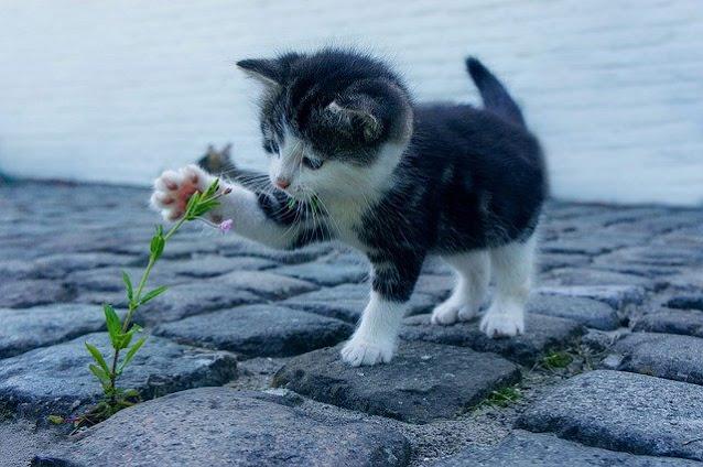Kucing Kampung Jagoanku
