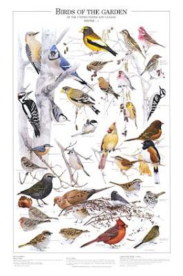 Birds of the garden poster 2