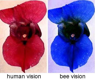 Οι μέλισσες ξέρουν να μετρούν αλλά και να αναγνωρίζουν ανθρώπινα πρόσωπα!
