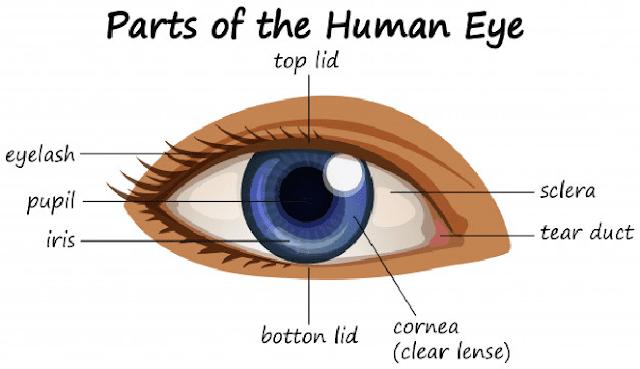 Cara menyembuhkan buta warna dengan cepat
