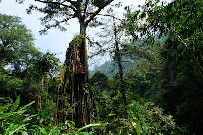 Petungkriyono, Paru-Paru Jawa Tengah yang Menakjubkan