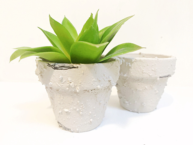 2 small terra cotta pots with paint treatment and a succulent