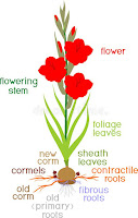 Flower representation