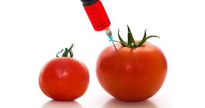 Efectos alimentos transgénicos