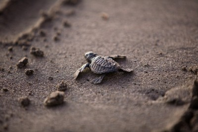 Marines In Mexico Patrol This Beach To Protect Endangered Baby Sea Turtles