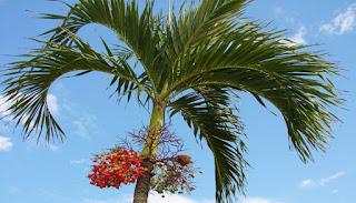 Pohon pelindung