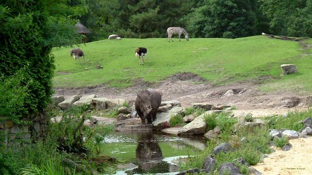 Neushoorn bij het water