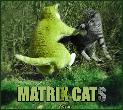 Photoshopped Cat picture • Matrix Cats • The ultimate fight • There can be only one!