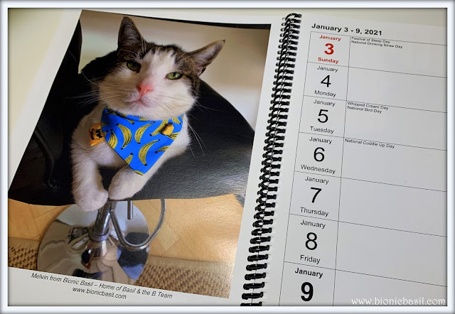 Melvyn Starring in The Weekly Planner by Sweet Purrfections ©BionicBasil® The Pet Parade 387