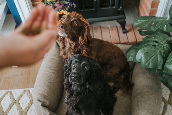 Tips for Anxious Dogs