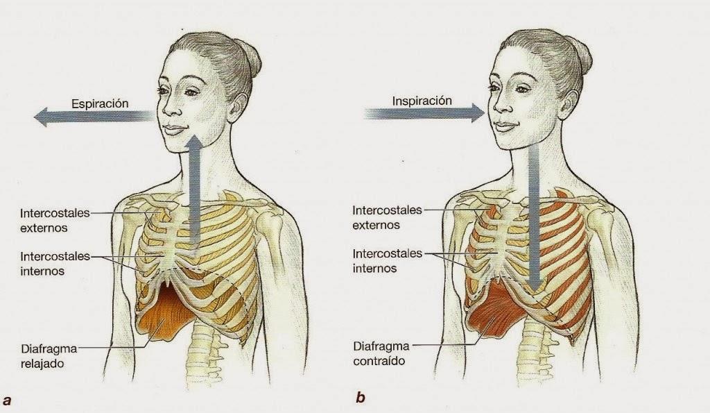 Cómo Controlar La Ansiedad La Respiración Abdominal: ¿Sabes Cuidarte?: Respirar Bien Para Vivir Mejor