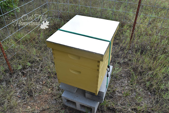 "I'd recently added the top medium box (a ""honey super"") on top of the hive."