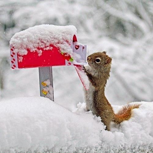 ardilla recoge correo
