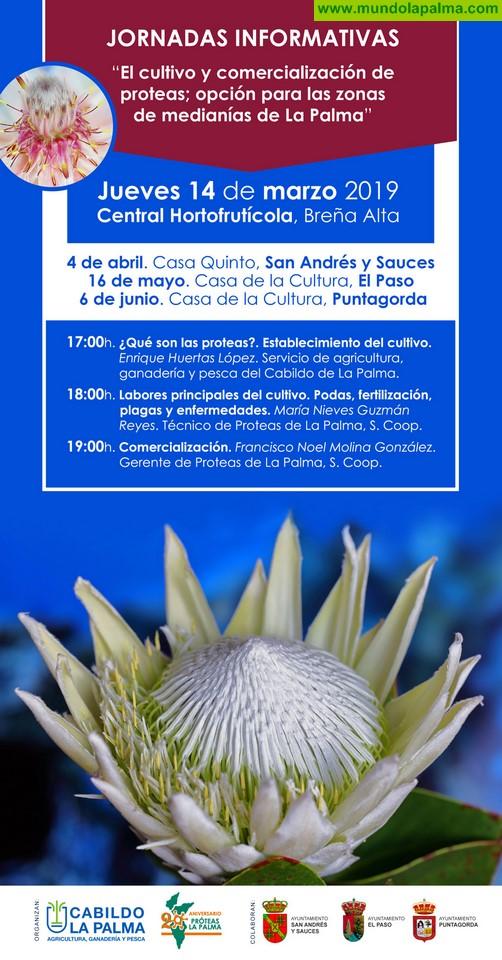 El Cabildo impartirá talleres sobre la producción, cuidados y comercialización de las proteas