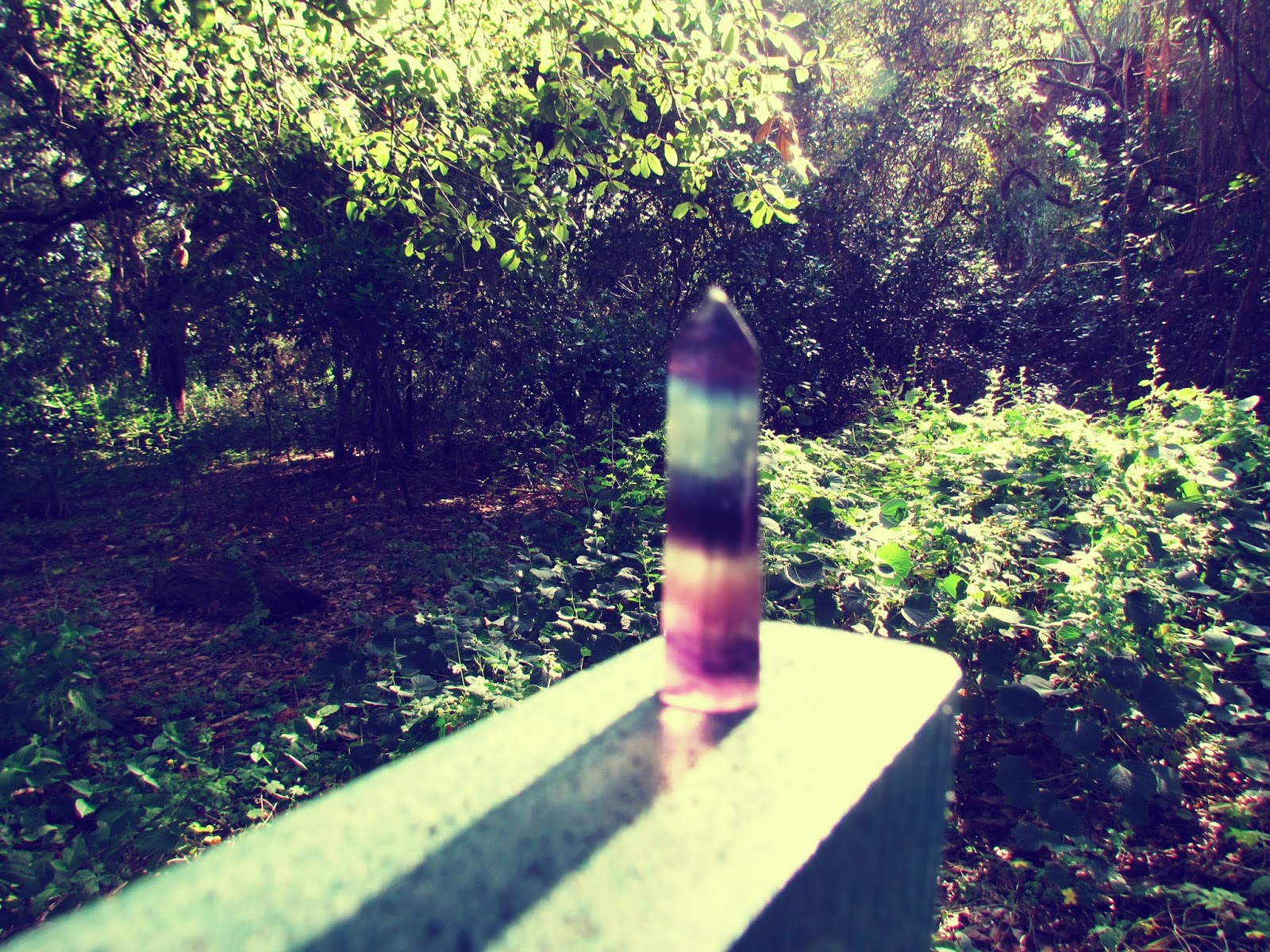 A rainbow fluorite wand with dark colors in a wild nature setting in the woodland of Florida