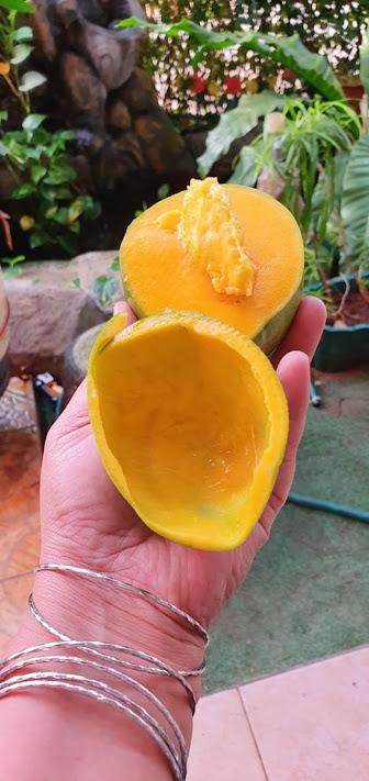 Mangga alpukat knonal 21 asli pasuruan berat 5kg estimasi 9 11 buah Lampung
