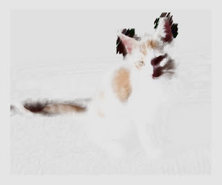 A cat's photo like a drawing with a brush.