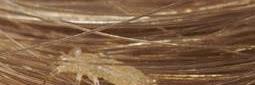 Cara Menghilangkan Kutu Rambut yang Cepat