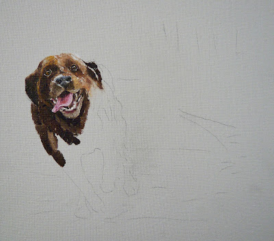 chocolate labrador oil painting - work in progress