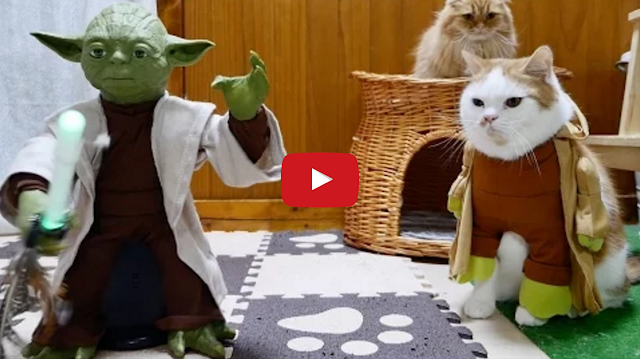 Tastefully Offensive: Jedi Munchkin Cats Get Trained by ...