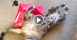 5 Cats Who Fail At Being Cats