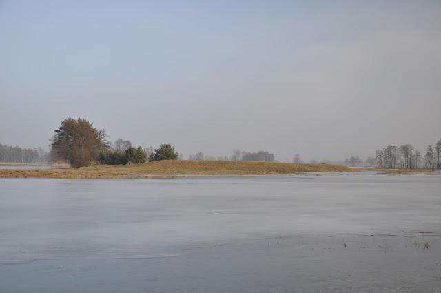 Grodzisko wczesnośredniowieczne pierścieniowate we wsi Prochy