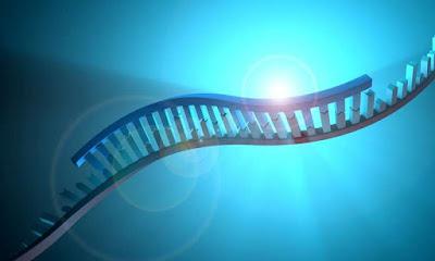 An illustration of mRNA.