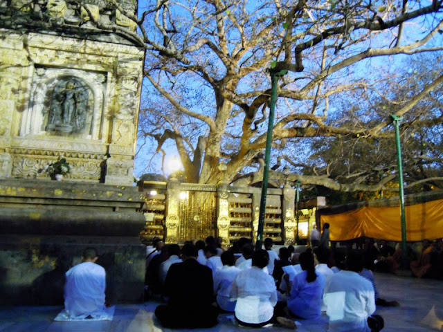 The Bodhi Tree at the Mahabodhi Temple, Bodhgaya