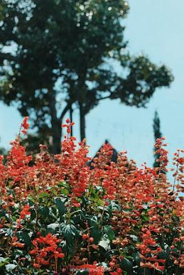 kebun bunga di the ranch puncak bogor