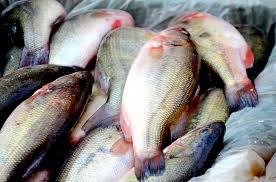 Petua Memasak Ikan Yang Betul Supaya Tidak Berisiko Penyakit