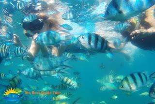 Snorkeling Karimunjawa Juni 2017