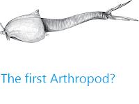 https://sciencythoughts.blogspot.com/2012/10/the-first-arthropod.html