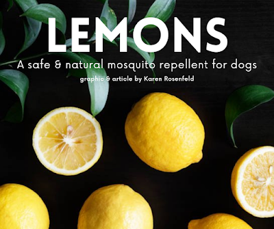 Lemons - A Safe and Natural Mosquito Repellent for Dogs and Cats